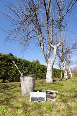 Apple tree garden whitening process and equipment