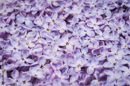 Foto op Canvas Lilac Background of lilac flowers