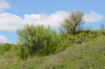 Деревья в степи
