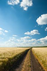 ground road in wheaten field.