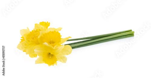 Poster Narcis Bunch of yellow daffodils isolated on white.
