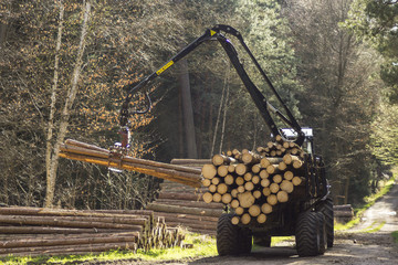 tractors for processing of harvested timber in the forest
