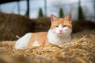 Cat on hay