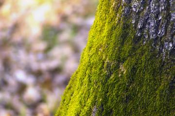 green mossy tree trunk