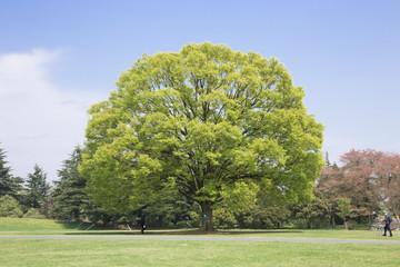 原っぱの大木と青空