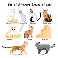 Vector set of cat breeds