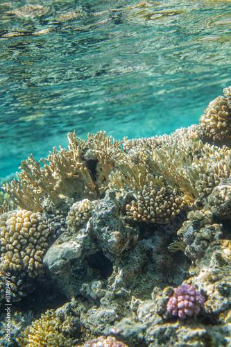 Fototapeta Red sea coral reef