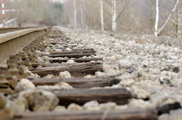 rail and birch