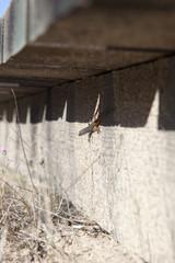 Lizard  under footbridge