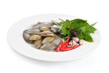 Fresh raw  clam on a white background