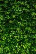 Artificial green Grass - 81902598