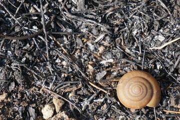 abstract snail shell after grass burn