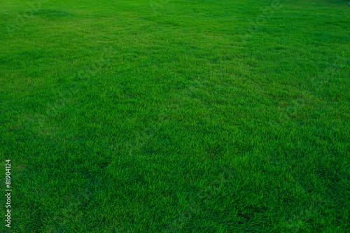 Artificial green Grass - 81904124