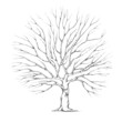 Baum für Hochzeitspaar mit großer Baumkrone