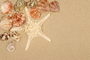 Seashore scene with starfish and seashells