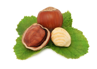 Ripe hazelnuts with green leaves (isolated)