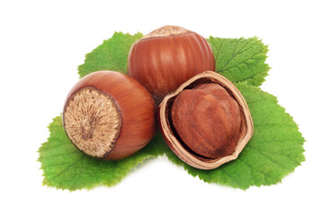 Three hazelnuts with green leaves (isolated)