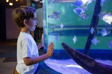Young man looking at fish in a tank