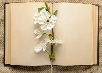 open book and a branch of cherry blossoms