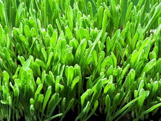 Fresh green grass. Nature background.