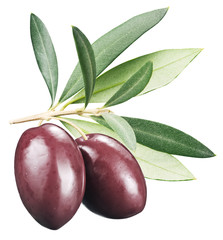 Kalamata olives with leaves on a white background.