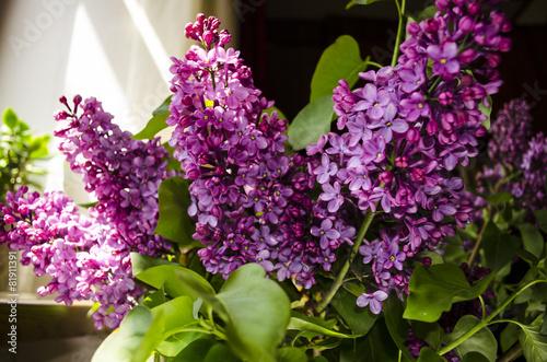 Foto op Canvas Lilac Bouquet bright lilac nearwindows