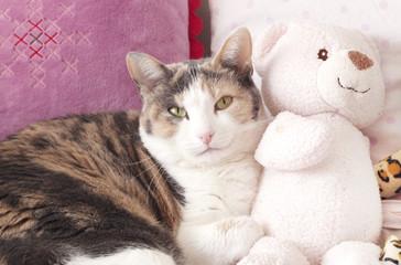 Gatto e peluche