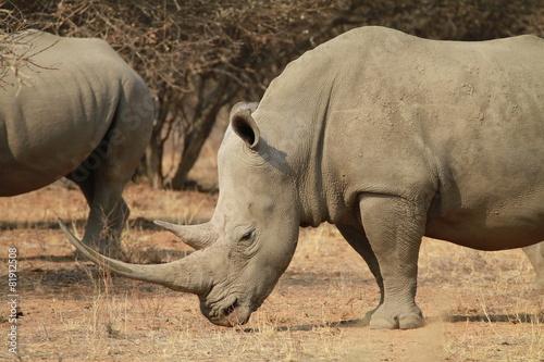 Deurstickers Neushoorn Nashorn, Namibia