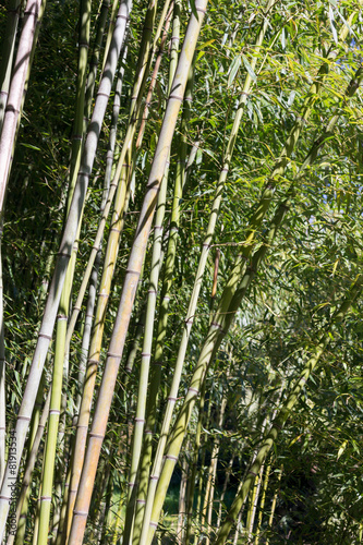 Foto op Canvas Bamboo green bamboo