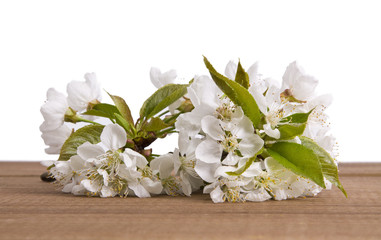 cherry blossom branch on wooden background