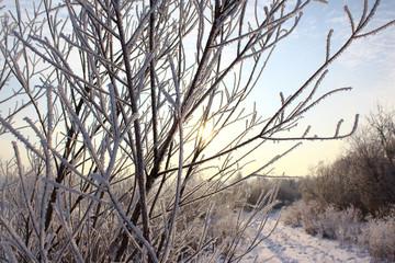Рассвет и ветки деревьев в изморози