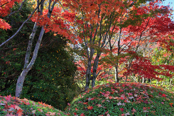 Under a canopy of red in Autumn