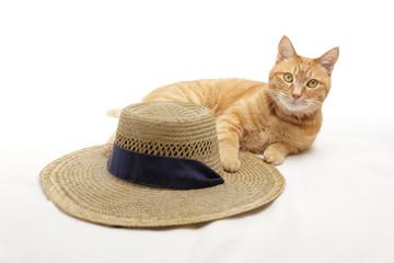 猫と麦わら帽子