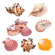 Seashell collection isolated on the white - 81920160