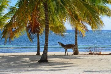 asino in spiaggia1