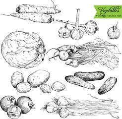 Set of  ink drawing vegetables