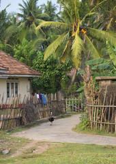 Уголок провинциальной Шри-Ланки