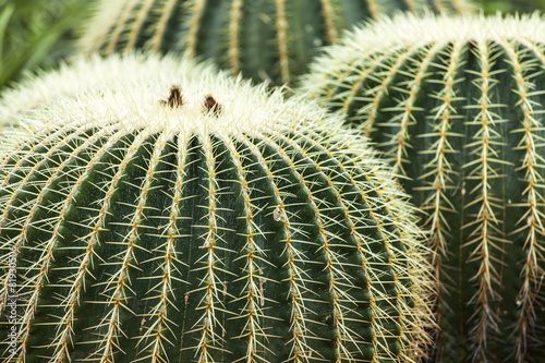 In de dag Cactus Ornamental plant a cactus in South park