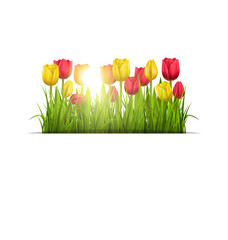 Green grass lawn with yellow and red tulips and sunlight isolate