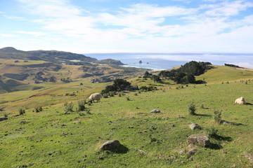 Landschaft in Neuseeland (Otago Peninsula)