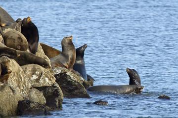 Sea lions stand guard in Newport, Oregon.