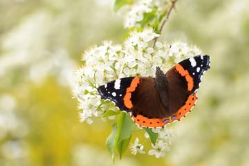 Schmetterling 123