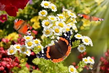 Schmetterling 138