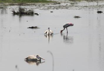 Water bird ecosystem