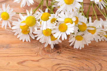 The beautiful daisy on wooden background
