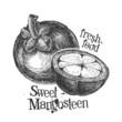 mangosteen on white background. sketch