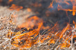 burning dry grass close up