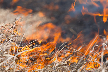 burning dry grass close up