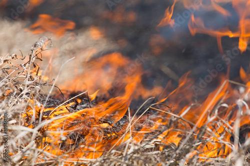 Leinwandbild Motiv burning dry grass close up