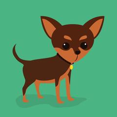 Pet design.
